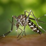 蚊を介して感染する感染症について