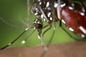 蚊の発生源対策!蚊が原因の感染症に注意