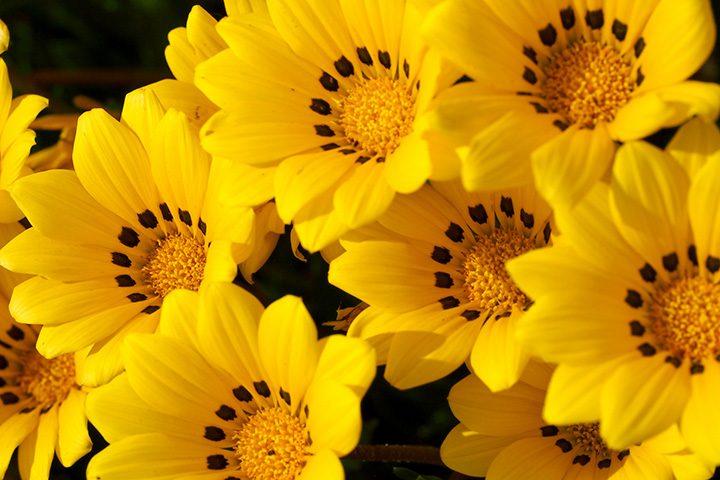春 から 秋 まで 咲く 花