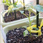 苗の植え付け方法 – 庭植え・鉢植え【ガーデニングの基本】