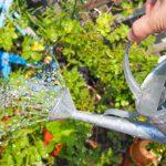 花の水やりのコツ – 時間や頻度は?【ガーデニングの基本】