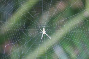 クモ(蜘蛛)が発生する原因とは?クモの習性を知って対策しよう