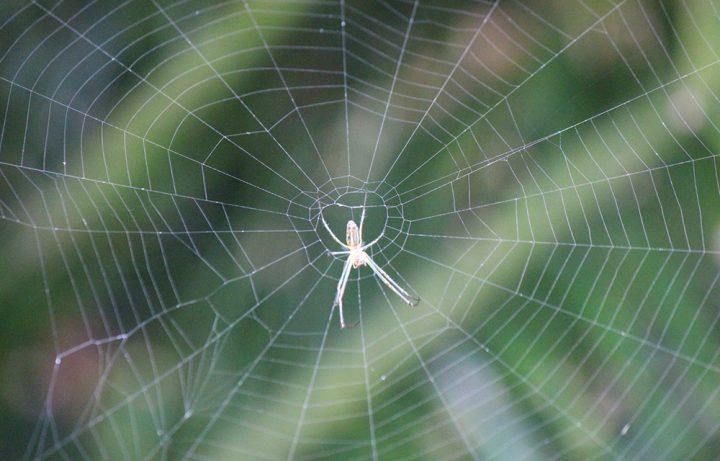 クモ(蜘蛛)が発生する原因とは?クモの習性を知っ