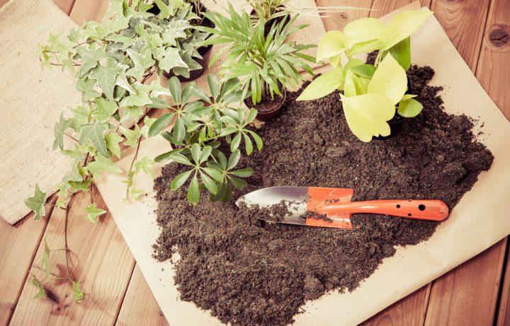肥料は大きく分けて2つの種類がある