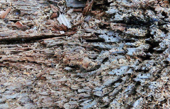 シロアリの生態・分布について