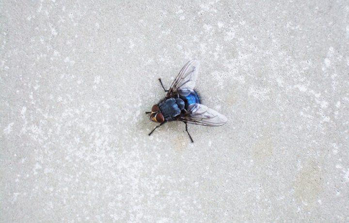 ハエ(蠅)が発生する原因とは?ハエの習性を知って対策しよう