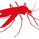 「蚊」の常識、非常識・・・ 血を吸うのは産卵前のメスの蚊だけなのだ