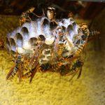 ハチ(蜂)が発生する原因とは?ハチの退治方法と予防対策