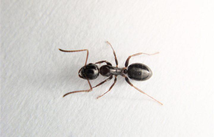 アリの生態について