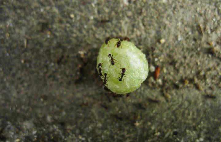 アリ(蟻)が発生する原因とは?アリの習性を知って対策しよう