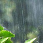 梅雨 (つゆ) 時期の湿気やカビ対策!部屋の除湿のコツ