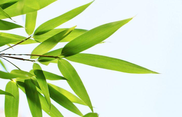 七夕に笹の葉が使われる理由とは?