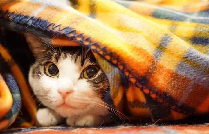 猫を留守番させるときに注意すべきこと