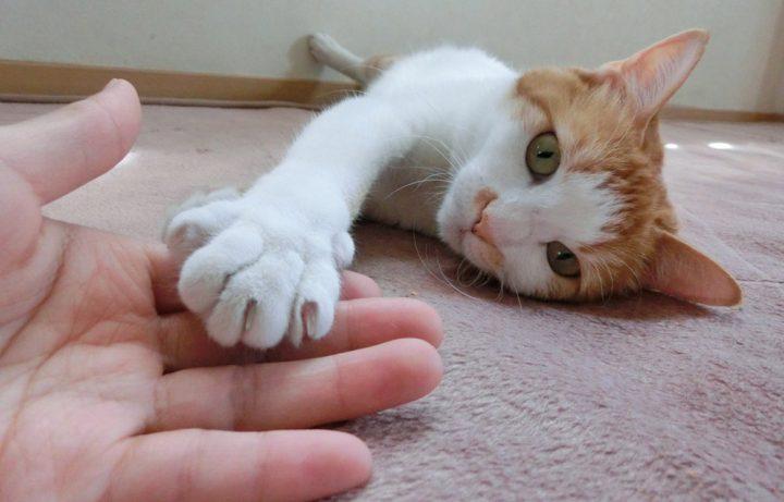 猫の気持ちになって留守番の対策をしよう