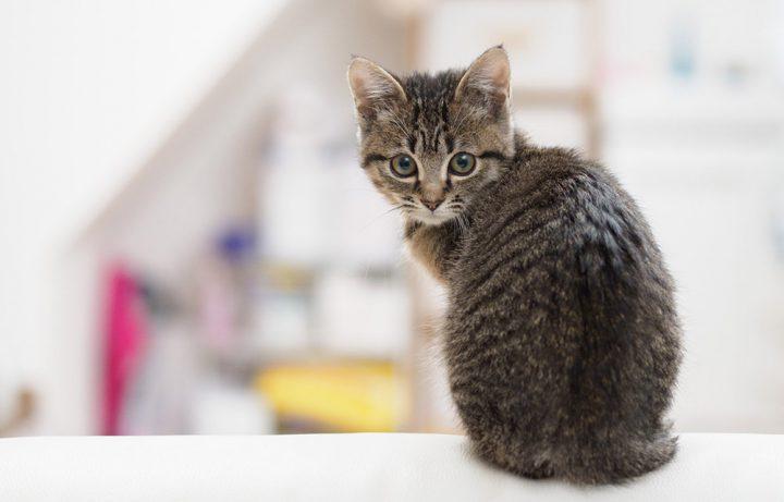 猫を留守番させるための準備と注意点!感じるストレスや寂しさへの対策