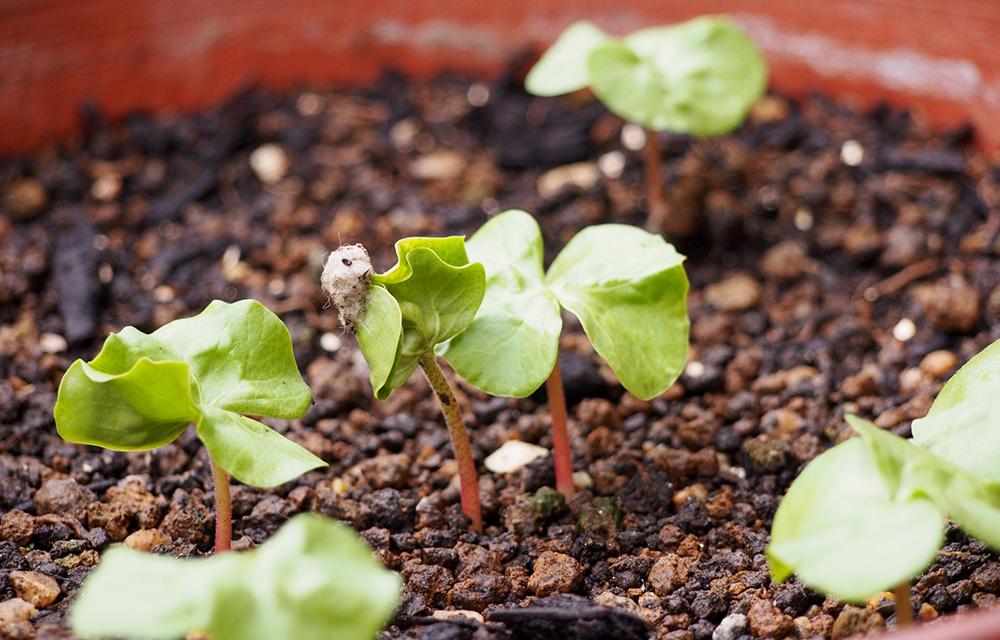 適切な種まきで発芽する喜びを味わってみよう!