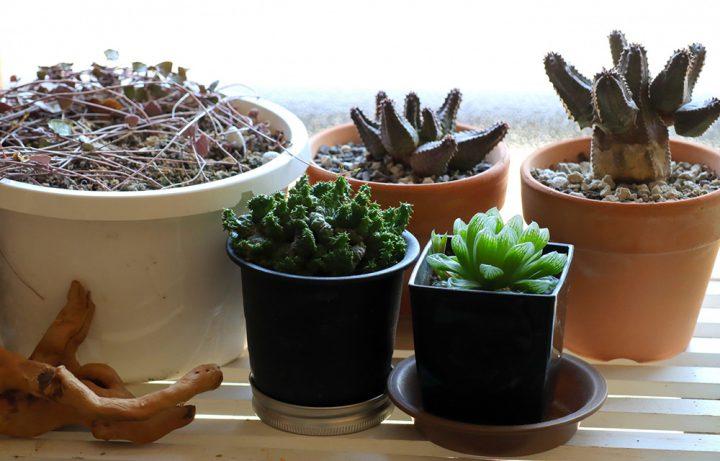 ベランダガーデニング初心者でも育てやすい植物