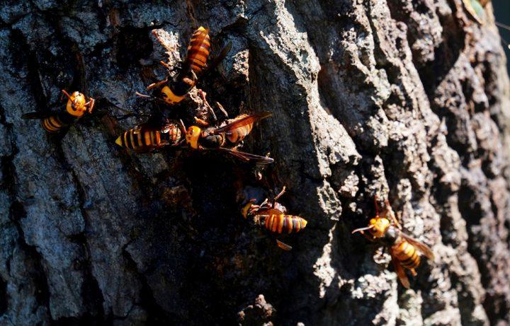 スズメバチによる被害について