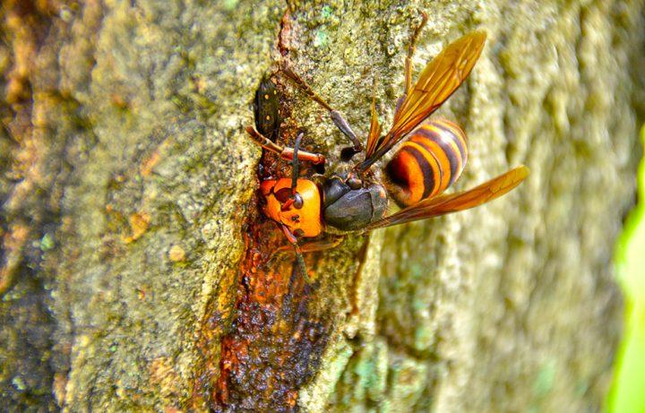 スズメバチの発生原因について