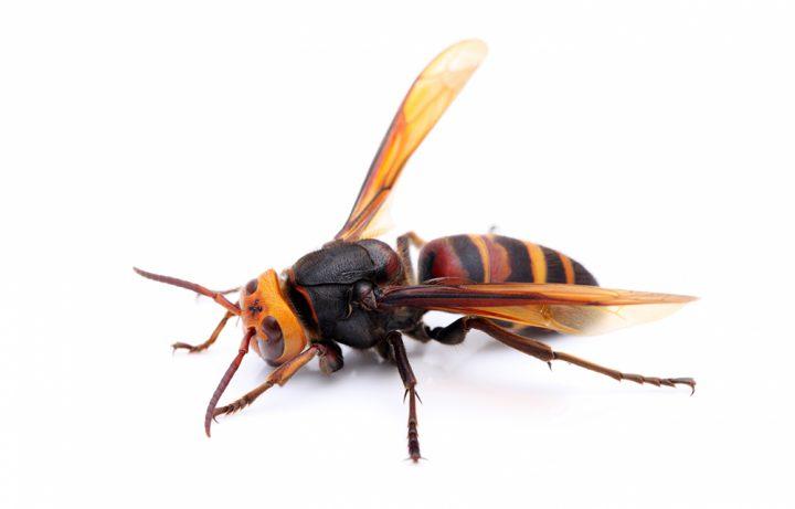 スズメバチが発生する原因とは?スズメバチの習性を知って対策しよう