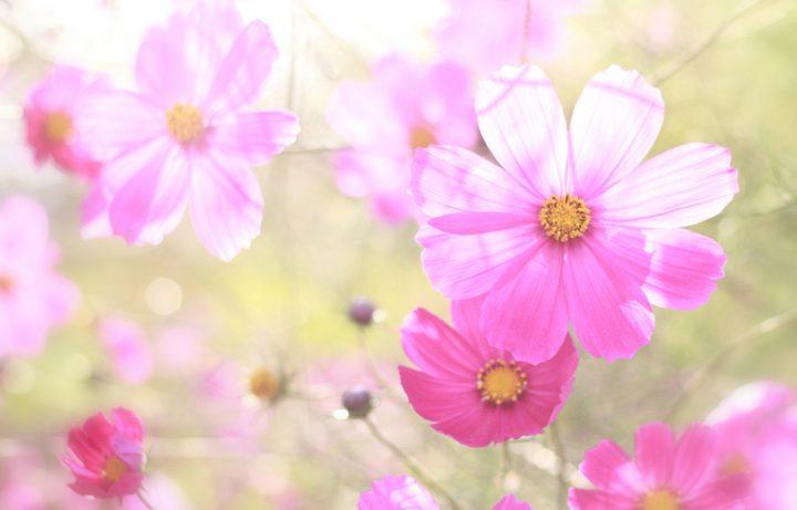 秋に人気の花でガーデニング!庭や鉢植えで季節を楽しめる植物