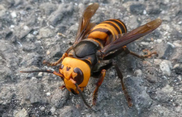 蜂の種類によって攻撃パターンが違う