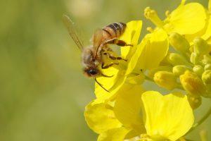 蜂(ハチ)は10月まで危険!被害に遭わないための予防・駆除・応急処置