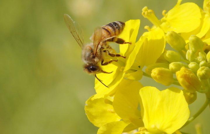 蜂(ハチ)は10月まで危険!被害に遭わないための予…