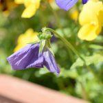 花がら摘みの方法 – 正しいやり方やタイミング【ガーデニングの基本】