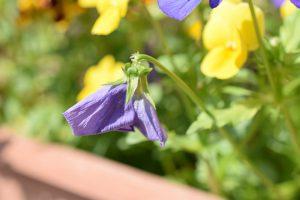 花がら摘みの方法 - 正しいやり方やタイミング【ガーデニングの基本】