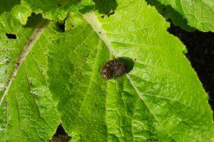ヨトウムシ(夜盗虫)が発生する原因とは?ヨトウムシの退治方法と予防対策