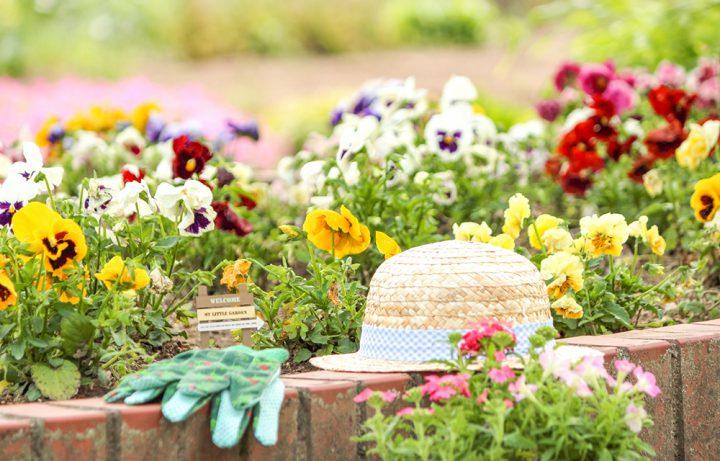 正しい切り戻し剪定で植物のスムーズな成長を促そう!