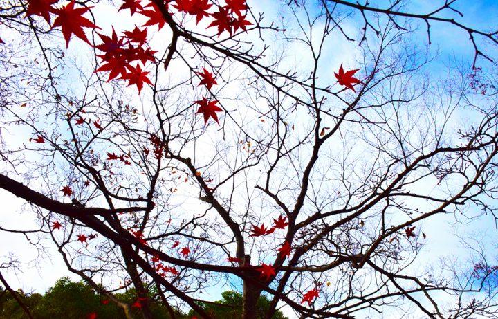 立冬の意味・由来を解説