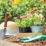 園芸、ガーデニングを楽しむ庭活(にわかつ)のすすめ