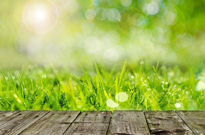 雑草はどんな植物?まずは雑草の種類を知ろう!