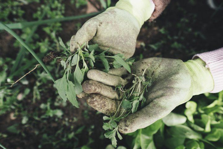 除草剤を使用するポイント