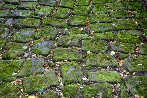 自宅でできる苔(コケ)栽培。コケの育て方、増やし方について