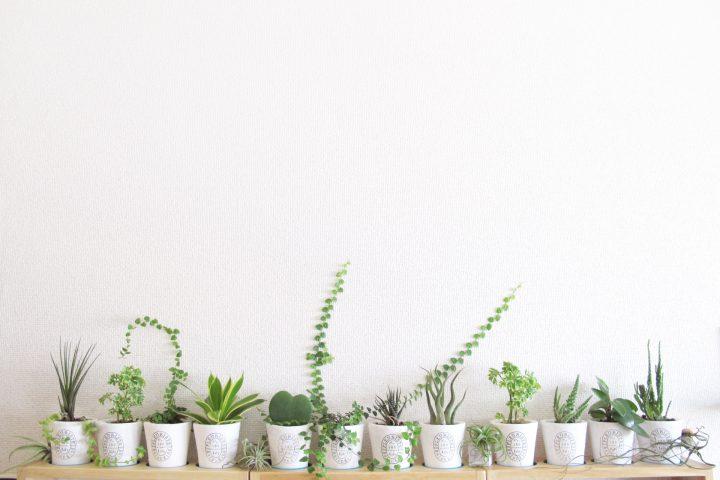 インテリアグリーンで室内の雰囲気をおしゃれに!おすすめのインテリアグリーン12選