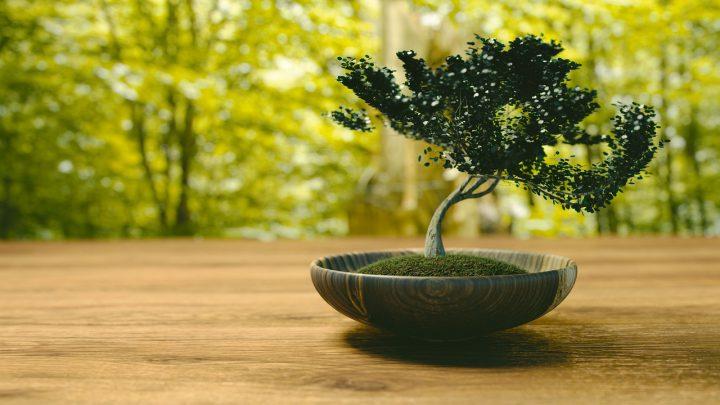 盆栽と苔の王道アレンジ