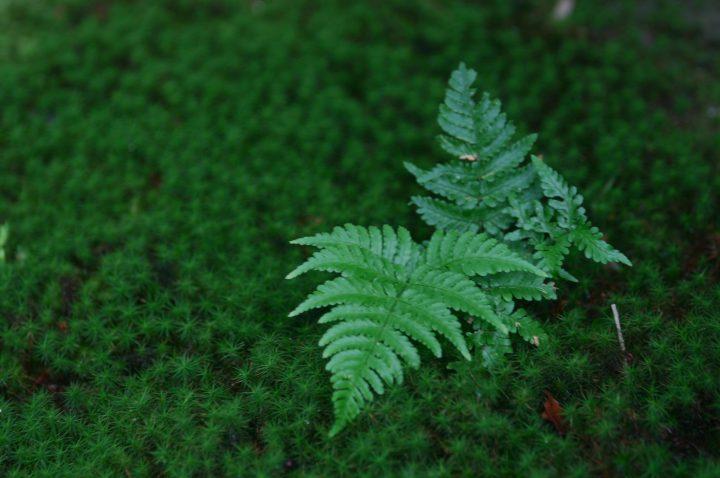 自宅で苔の栽培を楽しもう
