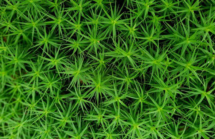 密かなブーム!苔についての基礎知識