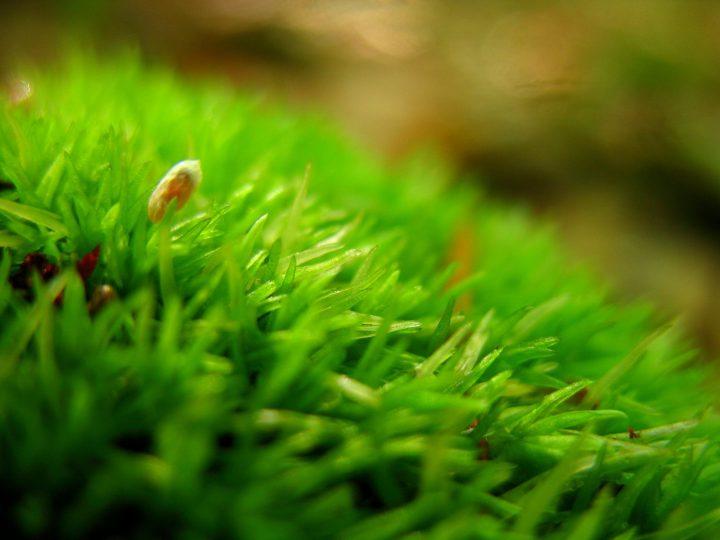 苔は大きく3つに分類