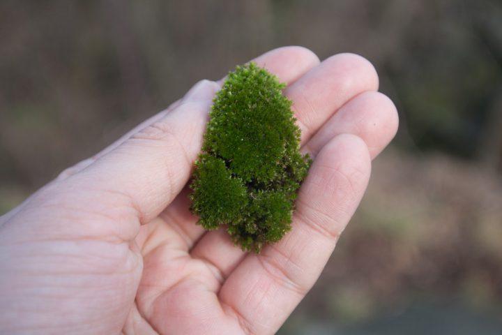 観賞だけではない!驚くべき苔の効果