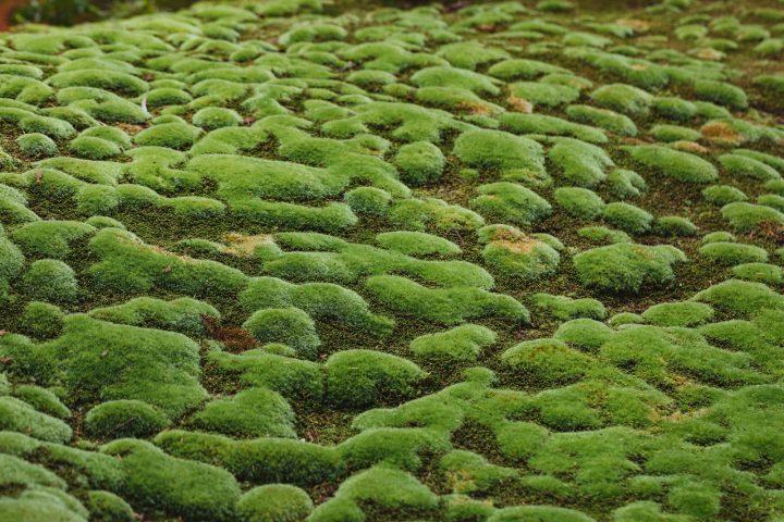 苔の消臭と抗菌効果