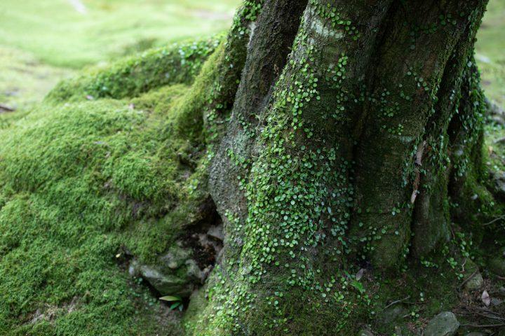 庭で苔を栽培してみよう