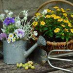 冬の花でガーデニング!寒さに強く育てやすい植物12選