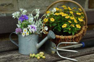 冬の花でガーデニング!寒さに強く育てやすい植物