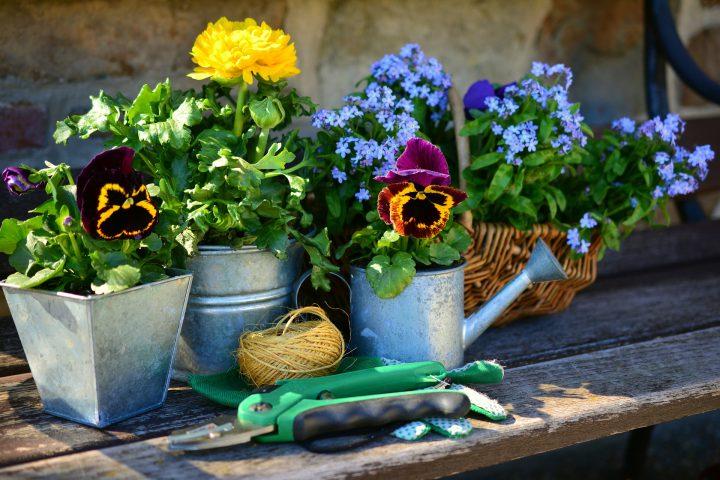 タイプ別!寒さに強い花のおすすめ12選