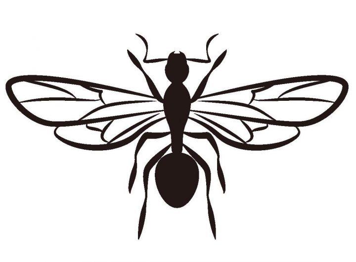 羽アリの種類、怖いのはシロアリか?クロアリか?