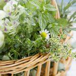 ハーブ栽培は庭やベランダの虫除けにも最適!